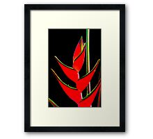 Tropicana - caribea flower Framed Print