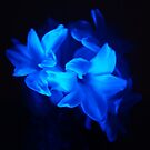 Dark Blue Flowers by davesphotographics