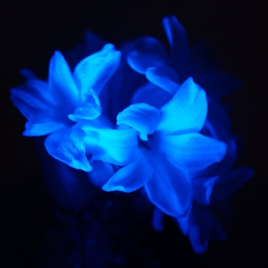 blue flowers pvt ltd essay Known as the pink city because of the  moon and the stars to simple flowers or  2002-2017 incredible real india tours & travel pvt ltd.
