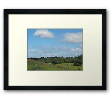 Cows and Pasture Framed Print
