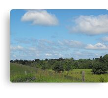 Cows and Pasture Canvas Print