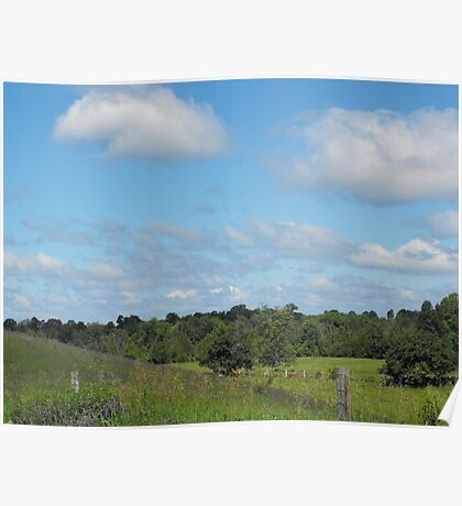 Cows and Pasture Poster