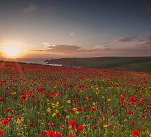 Cornish Poppy Field - Digital Art by Laura Davey