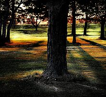 Trees & Shadows by Merlina Capalini