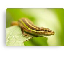 Chinese Green Striped Lizard Canvas Print