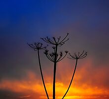 Sunset and Grass by Svetlana Sewell