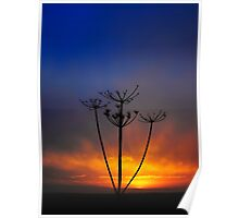 Sunset and Grass Poster