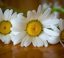 Crown of Daisies by SD 2010 Photography & Equine Art Creations