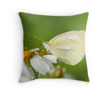 Indian Cabbage White Butterfly Throw Pillow