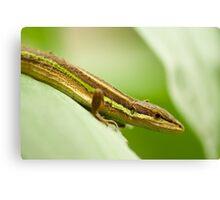 Chinese Green Striped Lizard Profile Canvas Print