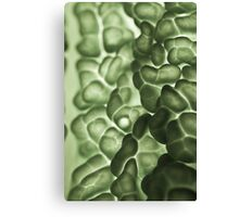 Macro of a savoy cabbage Canvas Print