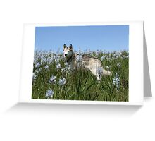 camas cruiser Greeting Card