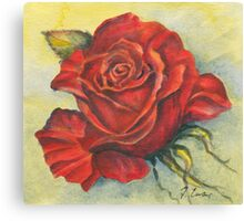 A Rose for Winter Canvas Print