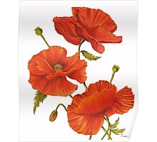 Poppies on White Poster