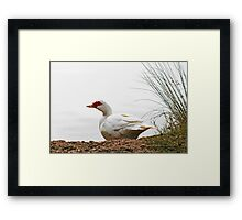 Duck In The Mist  Framed Print