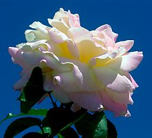 Rose and Sky by Doug Greenwald