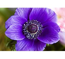 Purple Glory Photographic Print