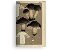 Illustrations of British Fungi by Mordecai Cubitt Cook 1891 V8 0107 AGRICUS  TRICHOLOMA  TENUICEPS Canvas Print