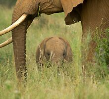 African Elephant and calf by tara-leigh