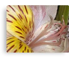 *LILY* Canvas Print