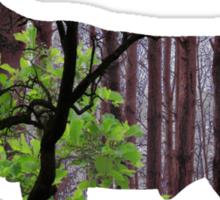 Forest 1 Sticker