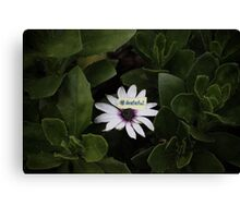 Grateful - collaboration with Photography by Paloma Canvas Print