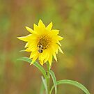Bee on Sunflower by Mike Oxley