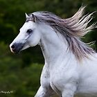 Equine Portrait by Kathy Cline