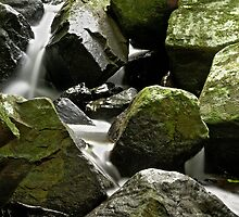 Rainforest Rocks  by GayeL Art