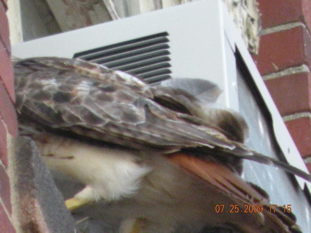 Raiding the nest...Uggggghhhhh by deborahpuerini