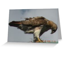 After raiding the nest Greeting Card