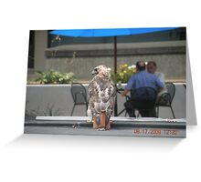 Another picture of the Red-Tailed hawk at Rhode Island Hospital Greeting Card