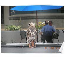Another picture of the Red-Tailed hawk at Rhode Island Hospital Poster