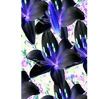Lovely In Black...  Inverted Lilys  Photographic Print