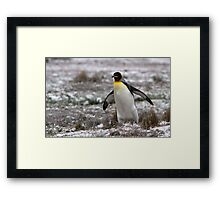 Penguin Waddle Framed Print