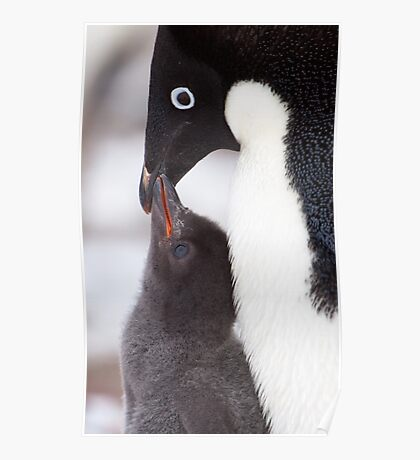Adelie Penguin and Chick Poster