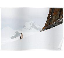 Chinstrap Landscape Poster