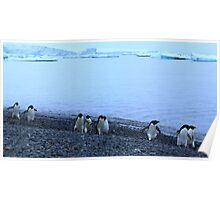 Adelie Penguins in Antarctica, 13 Poster