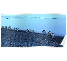 Adelie Penguins in Antarctica,   14 Poster