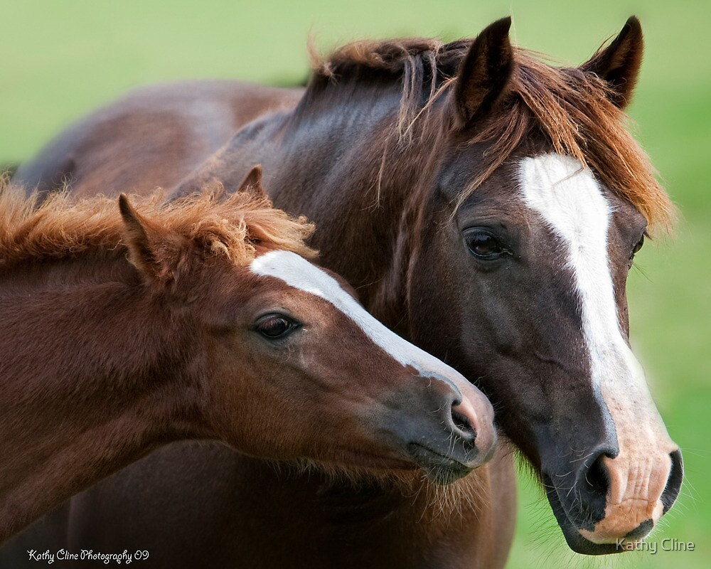 BABY KISS by Kathy Cline