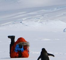 Adelie Penguins in Antarctica,   17 by Janai-Ami
