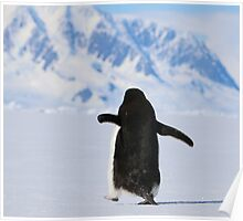 Adelie Penguins in Antarctica,   18 Poster