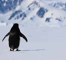 Adelie Penguins in Antarctica,   19 by Janai-Ami