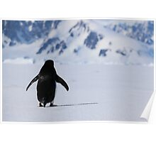 Adelie Penguins in Antarctica,   19 Poster