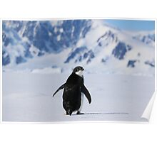 Adelie Penguins in Antarctica,   20 Poster
