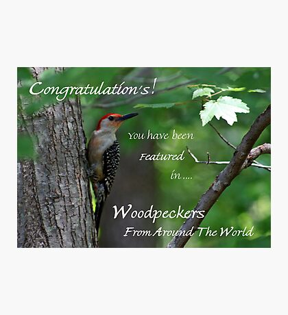 Male Red-bellied Woodpecker ~ Melanerpes carolinus  Banner Photographic Print