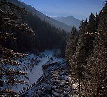 La pista in mezzo ai boschi by Andrea Rapisarda