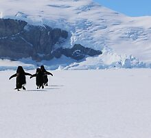 Adelie Penguins in Antarctica,   22 by Janai-Ami