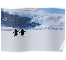 Adelie Penguins in Antarctica,   22 Poster
