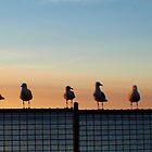 Seagulls - Normanville by rebecca brace